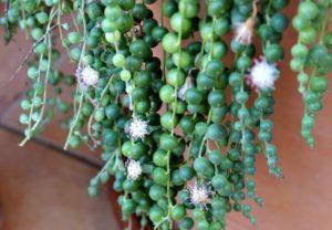 Planta rosario floristerias zaragoza