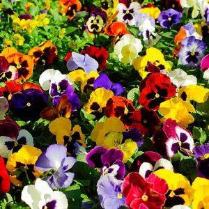 Plantas perfectas para el frío floristerias Zaragoza